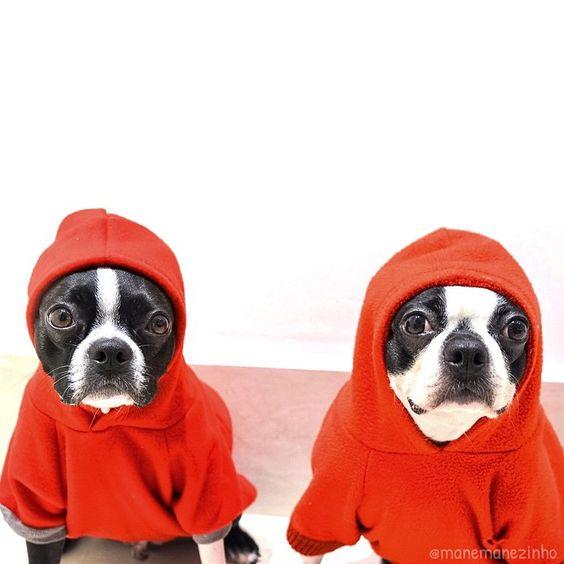 Two peas in a pod... ❤️ #bostonterrier #hoodie • Eu e minha mamis canina Elvira... amor e amizade sem limites!!! • {Cara de um... Fucinho do outro!} ❤️ #SemanaDoAmigoZee #manégalã
