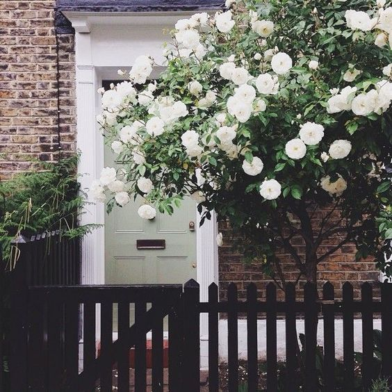 Beautiful coloured door with gorgeous white flowered tree outside