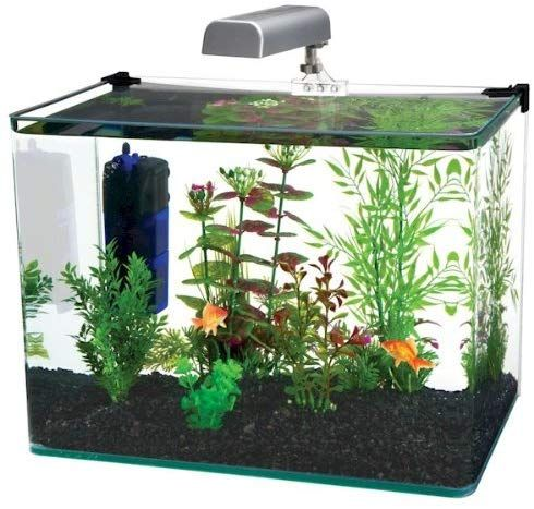 Best 10 Gallon Fish Tanks In 2020 Desktop Aquarium Aquarium Kit Glass Aquarium