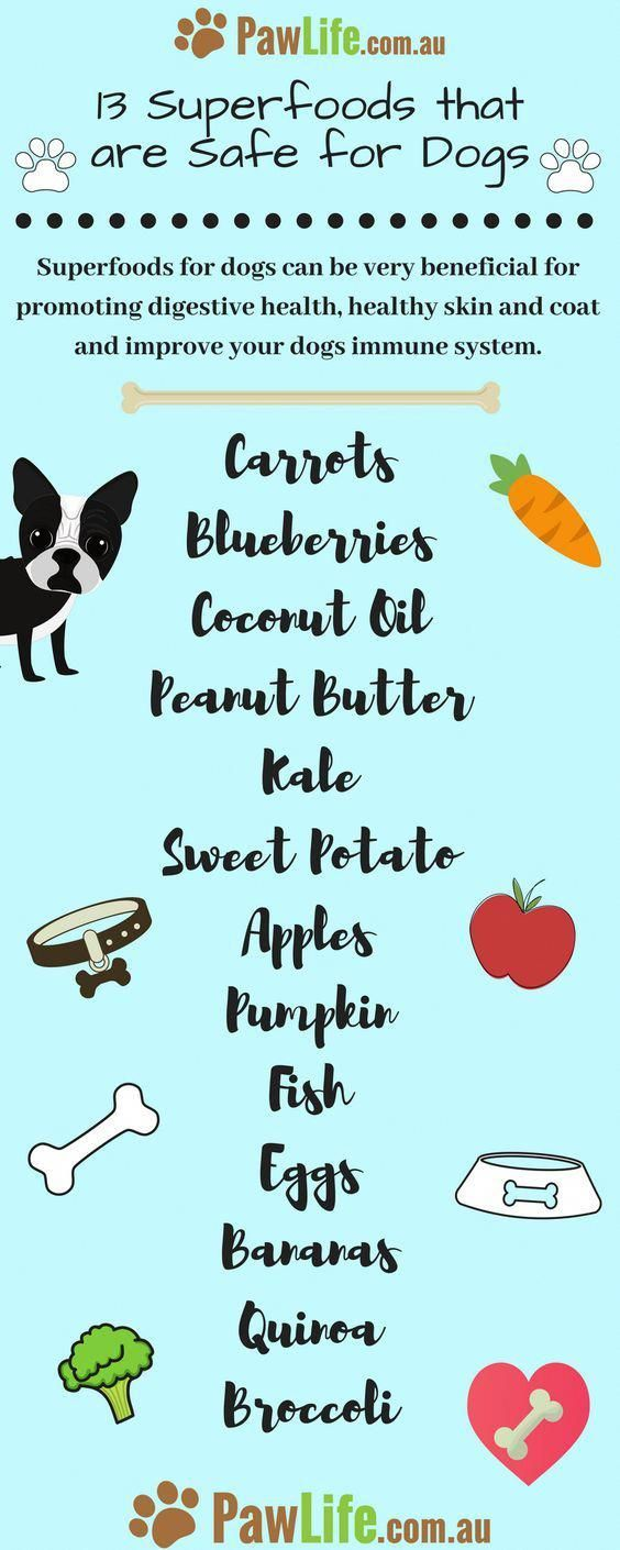 Canine Biscuits Aren T Actually An Important Part Of A Dog S Diet Plan But They Can Function As Scrumpt Pumpkin Dog Treats Dog Food Recipes Healthy Dog Treats