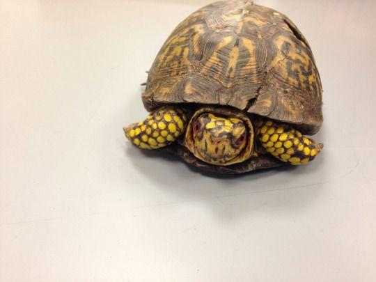 turtle named George Burns.