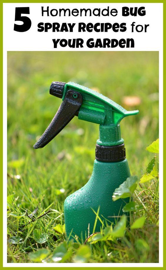 Homemade Bug Spray Bug Spray Recipe And Garden Pests On Pinterest
