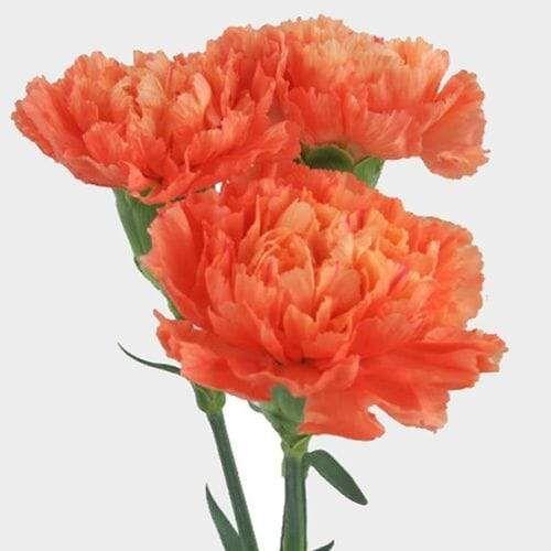 Pin On Flowers Flower Arrangements