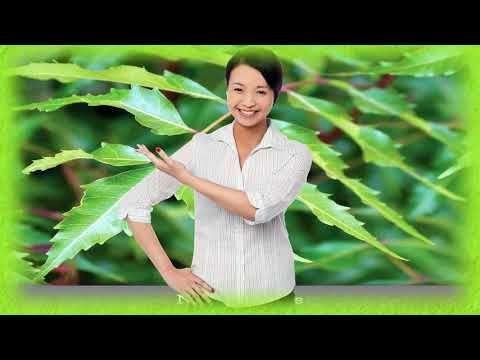 Planta de neem para bajar de peso