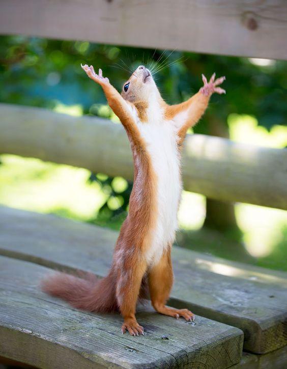 Voici une série d'adorables photos d'écureuils, de splendides images de ces facétieux mammifères.: