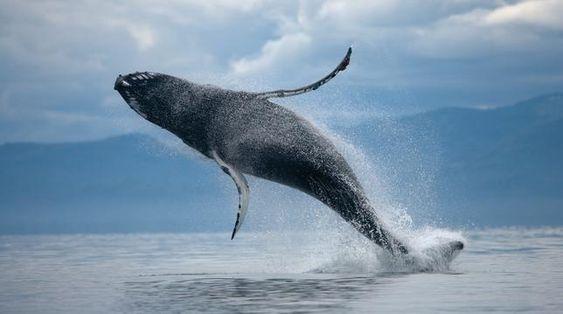 salto de la ballena