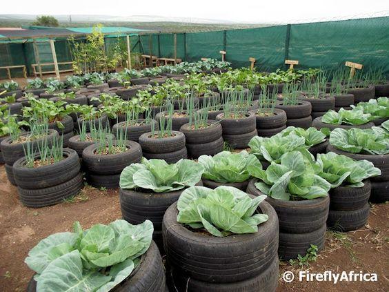 tyre vegetable garden gardening in pots containers pinterest vegetable garden vegetables and tired