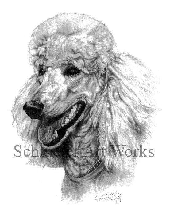 The Standard Poodle Print Poodle Drawing Dog Sketch Pet Portraits
