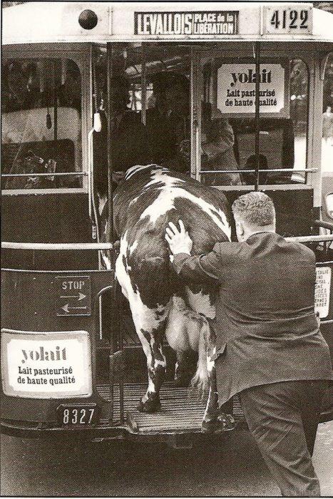 Oh la vache !!                                                                                                                                                                                 Plus