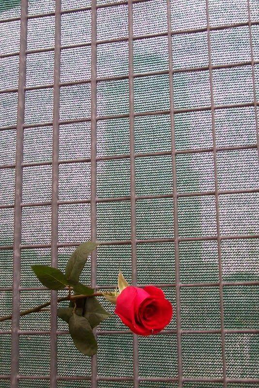 Fotos e palavras para sentir: Um lágrima.http://fotosparasentir.blogspot.pt/