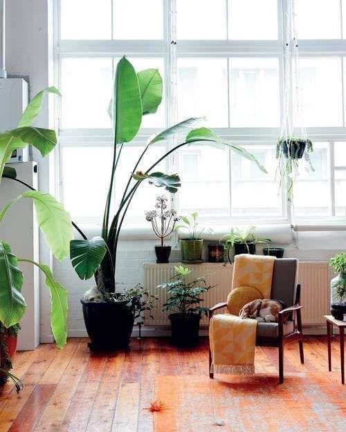 Piante Da Appartamento Grandi Foglie.Come Arredare Casa In Stile Jungle Piante Da Interno