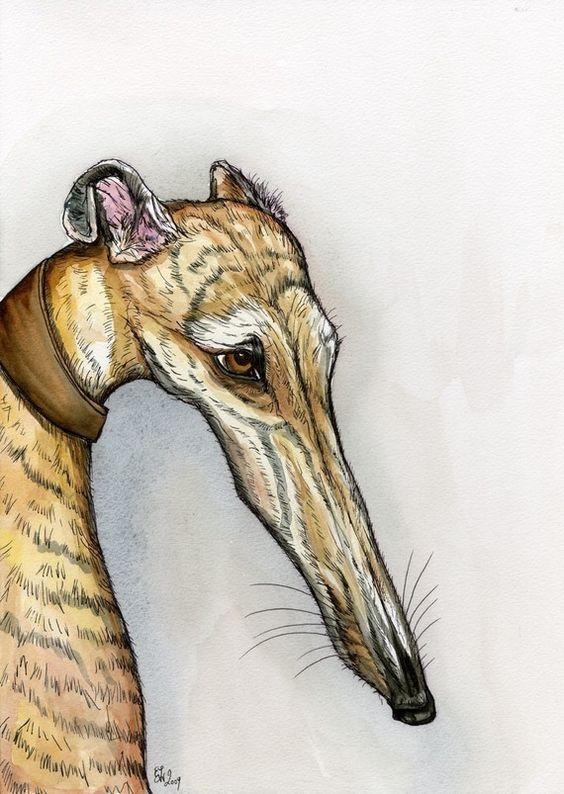 Sad face #greyhound: