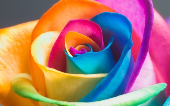 Neon Rainbow Rose Awesome Wallpapers Pinterest