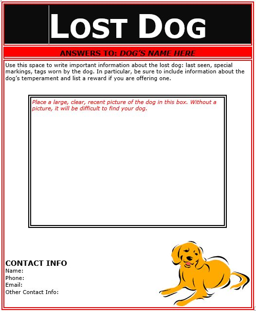 Lost Dog Flyer Template Flyer Template Pinterest Flyer   Lost Dog Poster  Template  Lost Dog Poster Template
