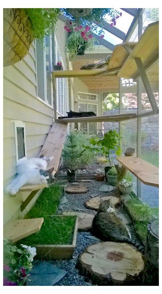 Consider These Top Cat Pleasing Plants For Your Catio Or Cat Enclosure Lounge Interior Ideas Wondering In 2020 Pet Friendly Backyard Cat Patio Outdoor Cat Enclosure