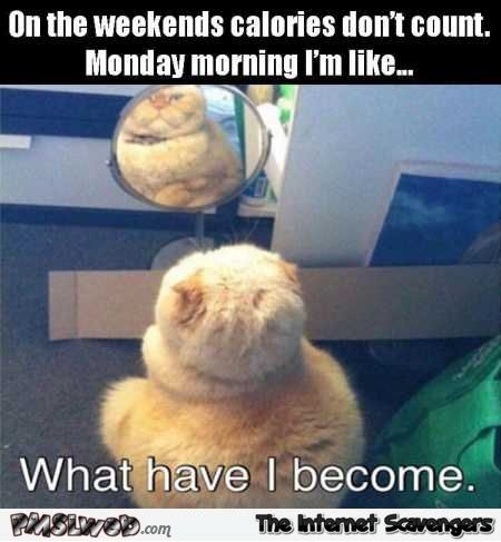 Mischievous Monday funnies  The art of nonsense  PMSLweb