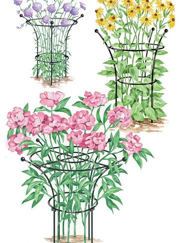 Essex Plant Supports  on sale gardener's supply
