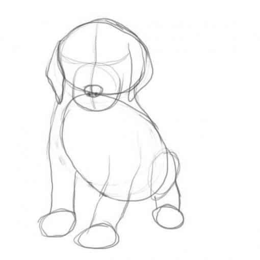 Welpe Zeichnen Lernen Schirtt Fur Schritt Tutorial Dekoking Zeichnen