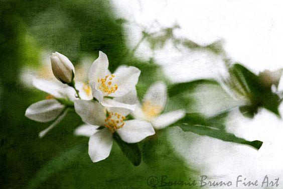 Sweet Scent of Love   ©Bonnie Bruno Fine Art