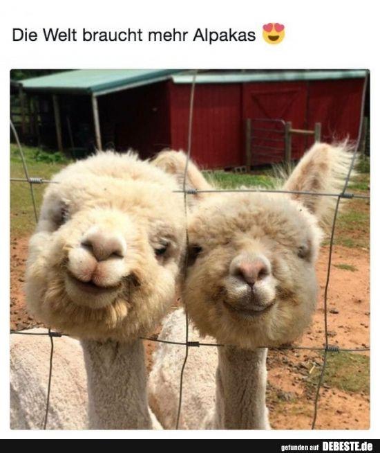 Die Welt Braucht Mehr Alpakas Lustige Tiere Niedliche Tiere