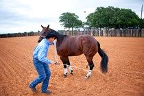 Bombproof Your Horse the Mounted Patrol Training Way with Horse Desensitization | EquiSearch