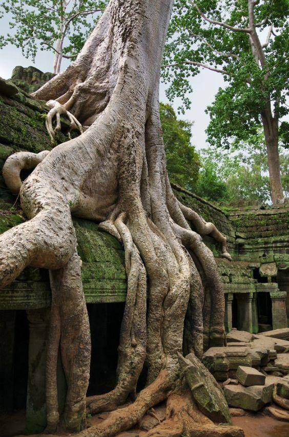 Những rễ cây như muốn nuốt chửng cả ngôi đền