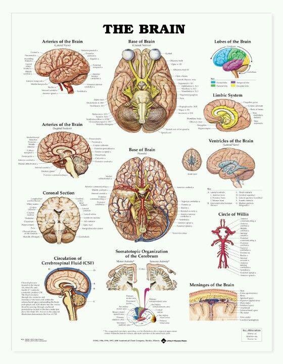 Human Anatomy Martini 7th Edition Pdf – Periodic & Diagrams Science