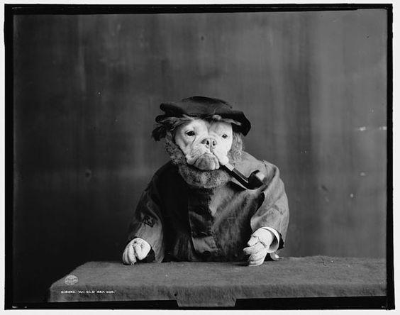 Bem Legaus!: Velhos Bulldogs