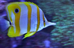 Resplendent; Adventure Aquarium; Camden, New Jersey, USA.  March 2013.