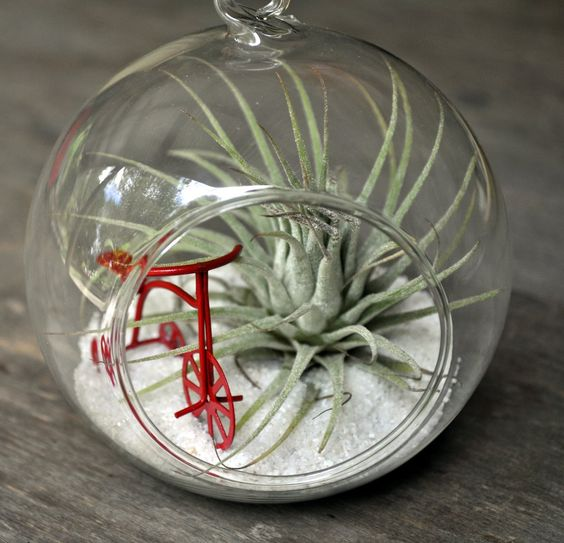 bowl plant