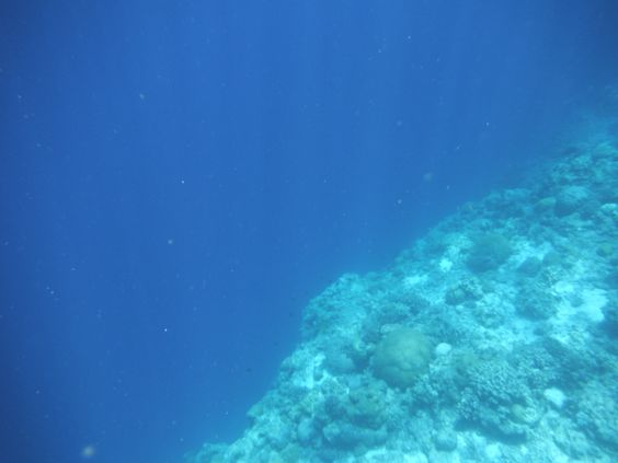 Where the shallow reef meets the deep water, literally a cliff face underwater.