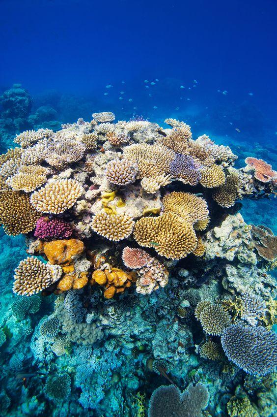 Great Barrier Reef, Australia Flux Photography, via 500px