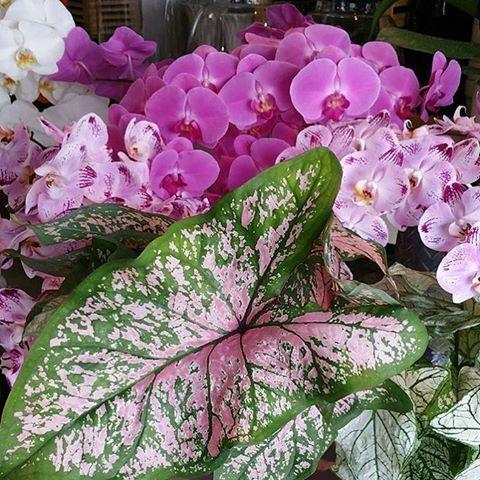 Beautiful 💕 Flowers by @seedflora ✨ #seedflora #seedflorist #florist #sydneyflorist #flowers #sydneyflowers #glebe