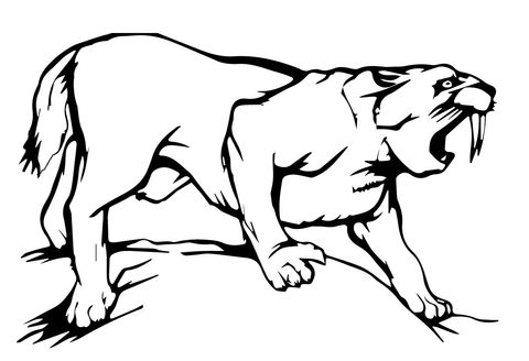 Sabre Tooth Tiger Coloring Page In 2020 Coloring Pages Animal