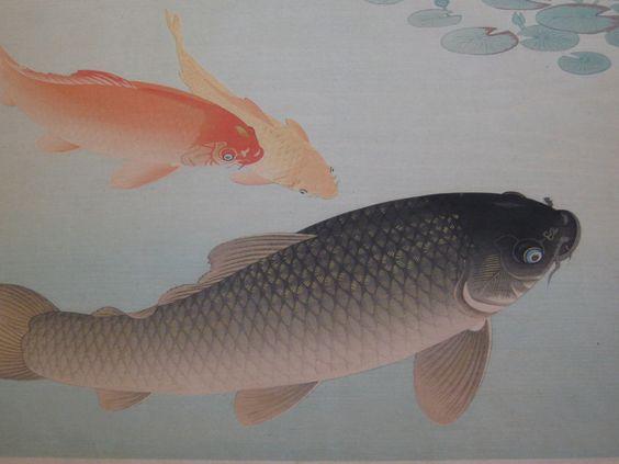 1900s OHARA KOSON JAPANESE WOODBLOCK PRINT GOLDEN COMMON CARP FISH