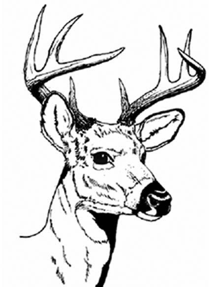 deer head coloring pages deer Pinterest Deer hunting