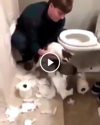 esse  gatinho é muito bagunceiro