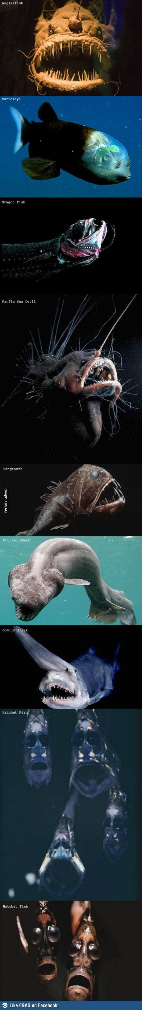 Creatures from the Mariana Trench.