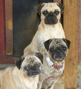 Facebook Rejects Puppy Mill Ads for Good!