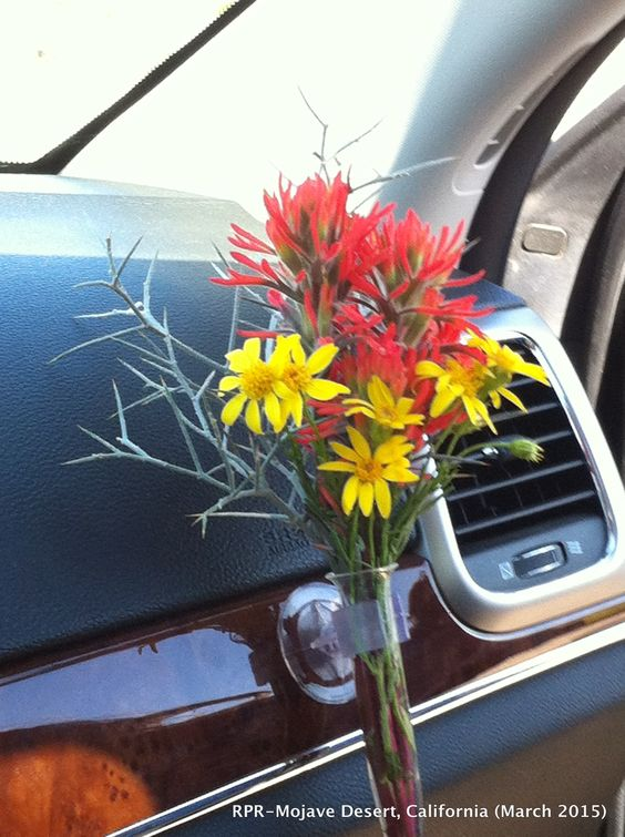 Travel bouquet. Mohave Desert. 2015
