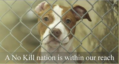 A no-kill nation is within our reach; let's show everyone, NYC!