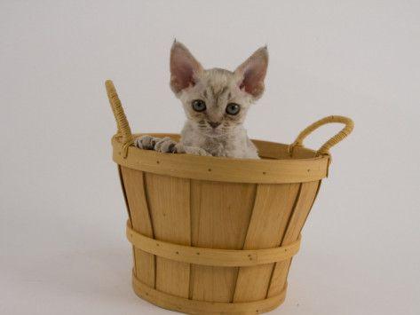 Kitten (*^^*)