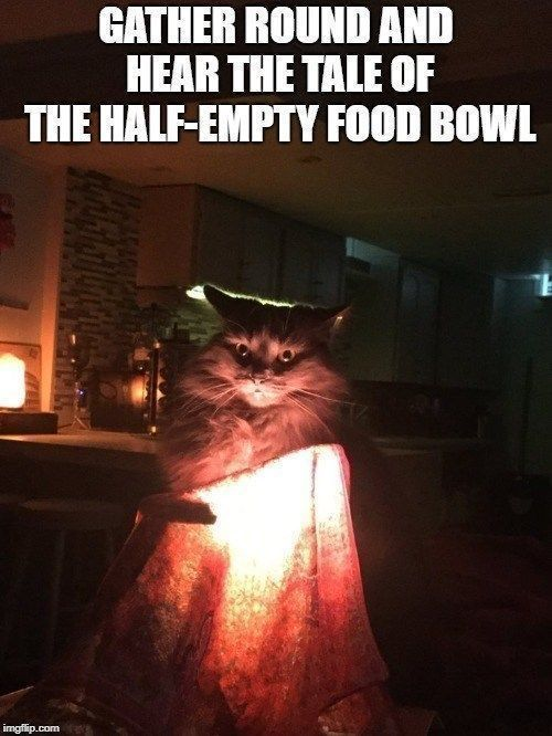 30 Funny Cat Memes That Will Make You Laughing So Hard Funny Cat Memes Funny Cats Cat Quotes Funny