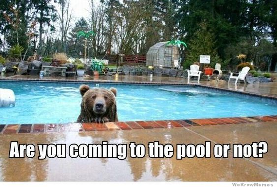 Funny Pools And Humor On Pinterest