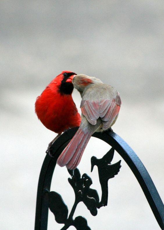 Cardinals: