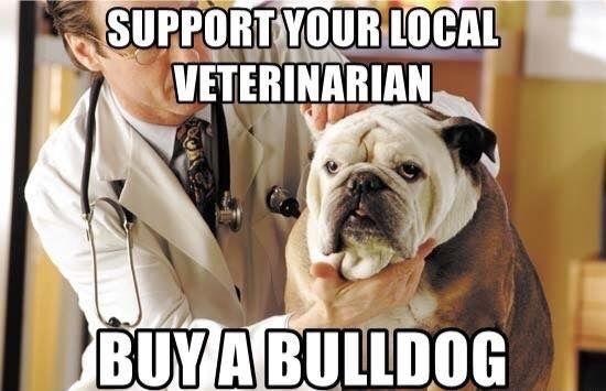Pin By Erika Vital Saleh On Bulldog Ingles English Bulldog Doggy Bulldog