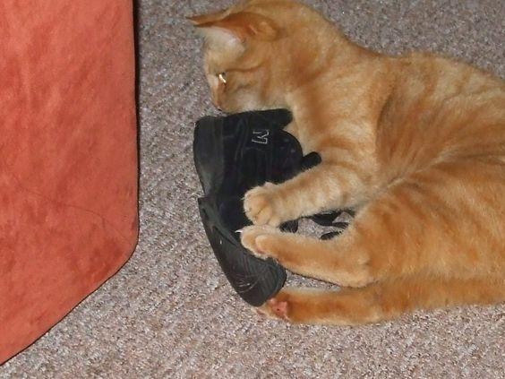 Pucki liebt Schuhe