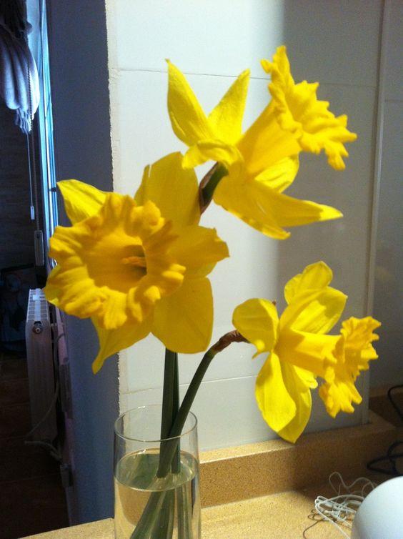 Tres narcisos en jarrón. Artículo: Decora tu hogar con narcisos #DecoraconFlores
