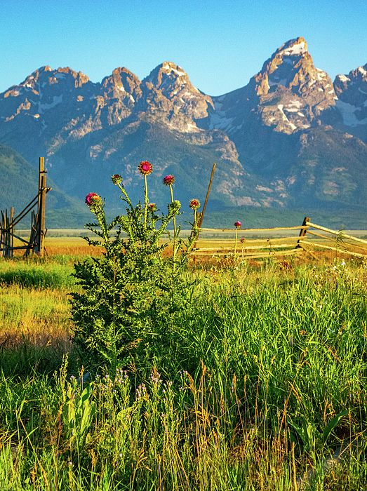 Wildflowers In Wyoming Landscape Photography Nature Art For Your Home Decor Wall Art Wyo Landscape Wall Art Landscape Photography Nature Mountain Landscape