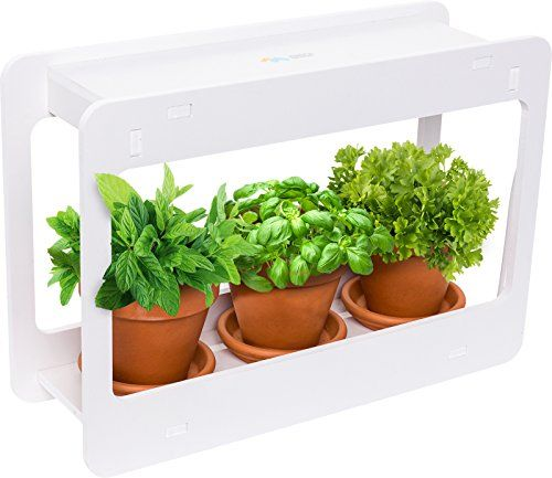 Led Indoor Herb Garden At Home Mini Window Planter Kit Https